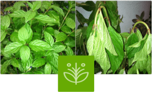 Moisture-Locg helps protects plants by reducing transpiration.
