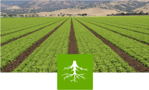 Root-Drench helps protects plants from drought