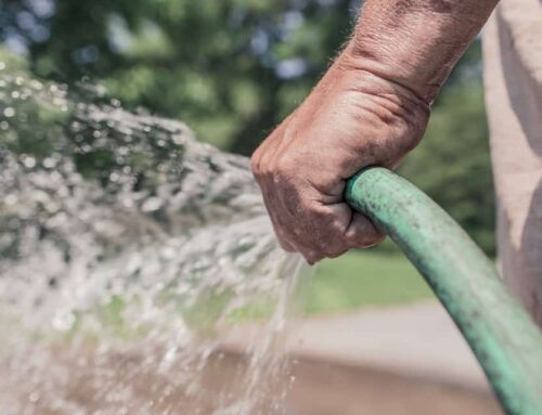 13 Essential Tips for Conserving Water In Gardens